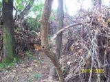 Bitva v lese 2006 (2/76)