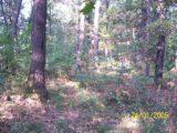 Bitva v lese 2006 (5/76)