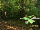 Bitva v lese 2006 (7/76)