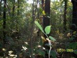 Bitva v lese 2006 (11/76)