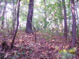 Bitva v lese 2006 (17/76)