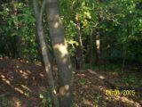 Bitva v lese 2006 (18/76)