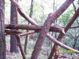 Bitva v lese 2006 (27/76)