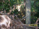 Bitva v lese 2006 (33/76)