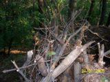 Bitva v lese 2006 (38/76)