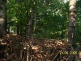 Bitva v lese 2006 (45/76)